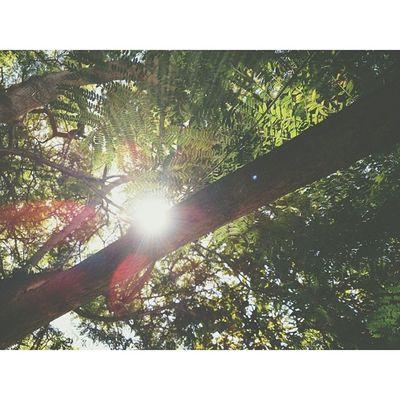 Goodmorning. Goodmorning Sunshine Sunnyday Riseandshine NewyearWednesdayHaveAGoodDay