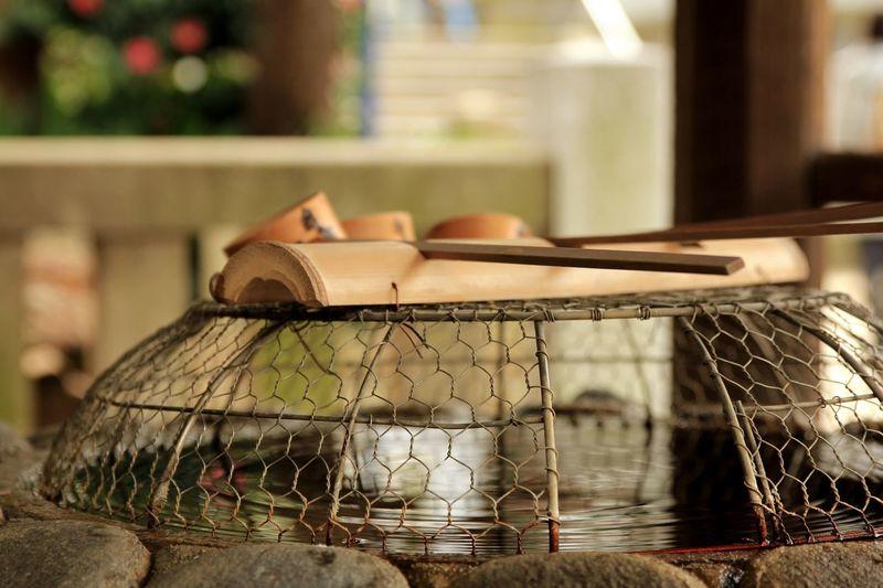 Close-up of snake in basket