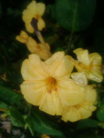Flowers, Nature And Beauty Walking Around