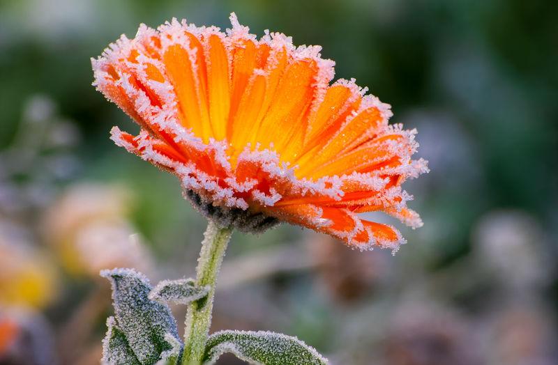 ice crystals on