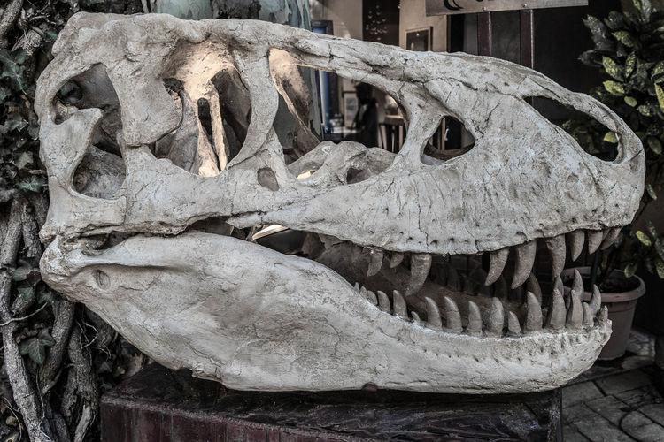 Jurassic Bones Dinosaur Dinosaurios Dinosaurs Esqueleto Fosil Fossil Jurassic Jurassic Park Jurassic World Theme Park Skull And Bones T Rex Dinosaur Animal Bone Animal Skull Close-up Day Dinosaurio Fosiles Fossil History Jurassic Period Jurassic World Skeleton Skull T Rex