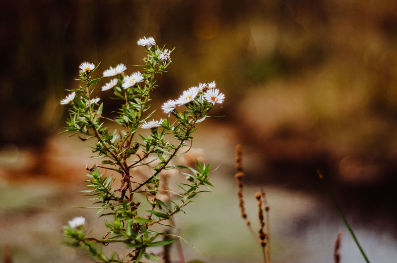 Plant Growth Flower Nature Beauty In Nature Flowering Plant Focus On Foreground Selective Focus Day Close-up No People Vulnerability  Fragility Freshness Outdoors Tranquility Green Color Leaf Plant Part Flower Head