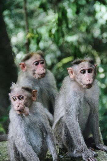 Close-up of monkeys sitting against trees