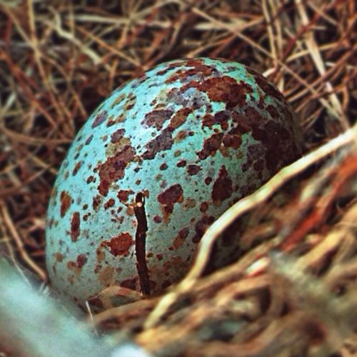 Found a bird's nest and this egg hiding under the seat of my brother's tractor yesterday!? EyeEm Best Shots EyeEm Best Shots - Nature EyeEm Nature Lover Taking Photos