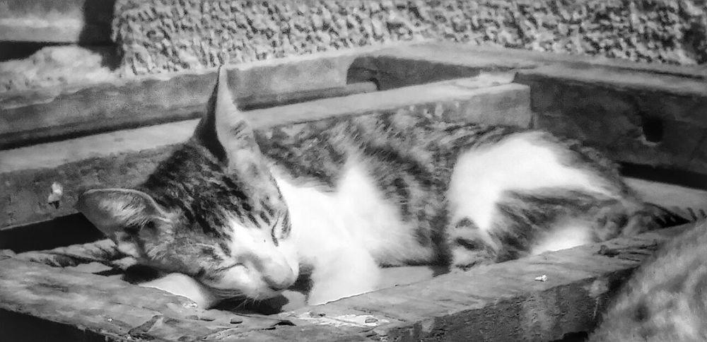 Love Animal Streetcat Ssssshhhhhh She Is Sleeping. <3