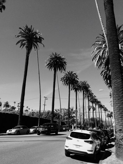 Palm Trees Hello World Hi! Taking Photos Slow Pace Los Ángeles Beverly Hills Feeedom Hanging Out Flowerstothepeople Tranquil Scene
