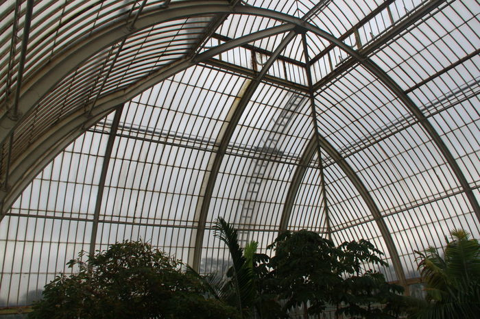 Arcade Arch Architectural Design Architectural Feature Architecture Ceiling Close-up Day Glass Glass - Material Grid Growing Indoors  Kew Gardens Low Angle View Modern NoEditNoFilter Plant Roof Skylight Sunny Transparent Transportation Building - Type Of Building