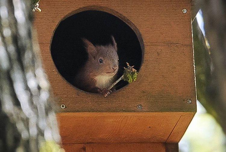 Eichhörnchen 🐿 Animal Themes Animal Animal Wildlife One Animal Animals In The Wild Vertebrate Rodent