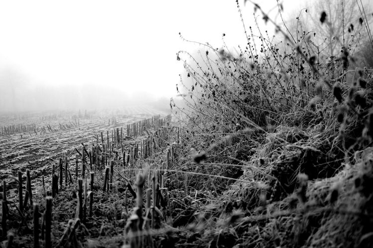 Fog Nature No People Outdoors Day Cold Temperature Winter Mountain Beauty In Nature Snow Tree Misty Morning Stubble Field Plant Nature Stubblefield Winter Black And White Black & White
