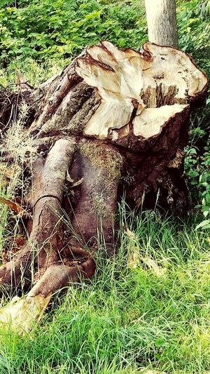 Tree Trunk Tree Trunk Splits Tree Trunk, Tree, Fallen Tree Check This Out Hello World Check This Out