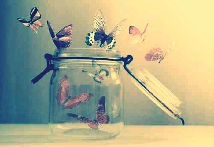 Beauty Butterfly True Romance