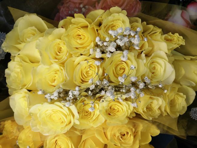 Yellow Rose of Texas Streamzoofamily Enjoying Life Austin Texas Flowers Photography