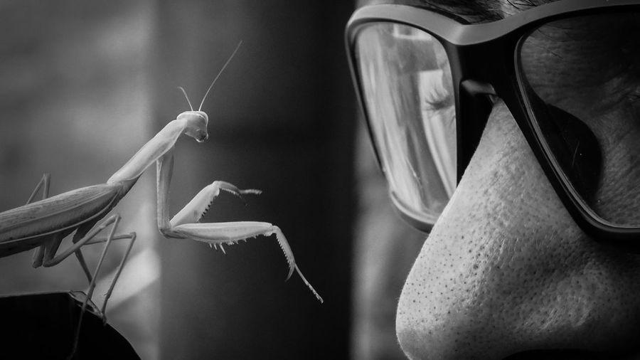 attack! Wildlife Naturelovers Control Grasshopper Praying Mantis Praying Mantis Close -up Black And White Nature Face To Face Nose Life Prey Hunter Defend Offence Agression Ready Sharp Outdoors Wild Action Action Shot  Animal Wildlife Close-up Calm Insect Grasshopper