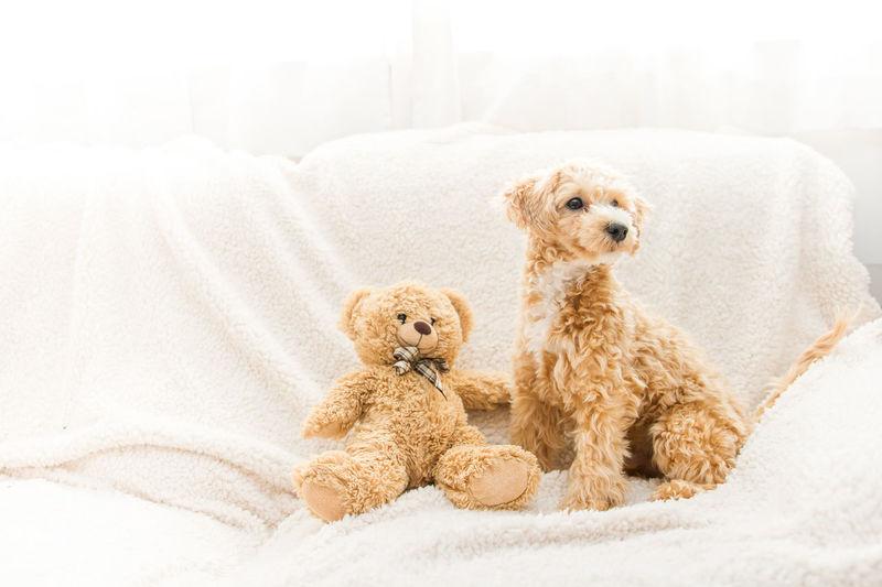 Dog With Teddy Bear On Sofa