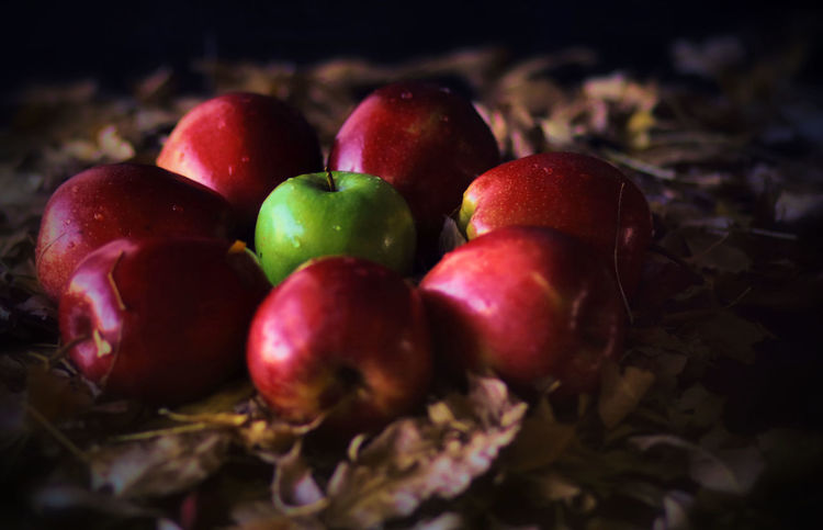 Apple Harvest Flower Fruit Red No People Food Harvest Fall Beauty Cozy Selective Focus Nature Leaves Apple Freshness Fall Colors
