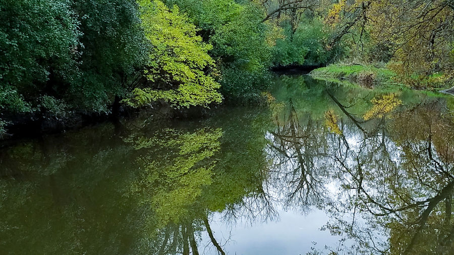 Reflection Water Nature Lake Outdoors No People Tree Beauty In Nature EyeEmNewHere Fullersburg Woods Branches Branch Fall Beauty Fall Colors Fall Leaves Fall_collection Fall Stream Salt Creek River Oak Brook Illinois Reflections Reflections In The Water Reflection_collection