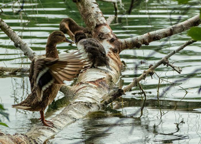 Vogelpflege