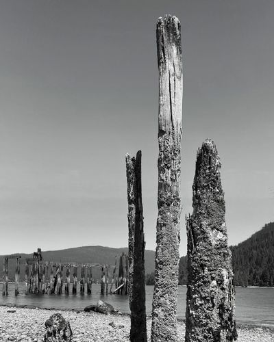 Burrard Inlet Vancouver BC Barnett Marine Park Old Wooden Dock Weathered Wood Low Tide Blackandwhite Photography EyeEm Selects