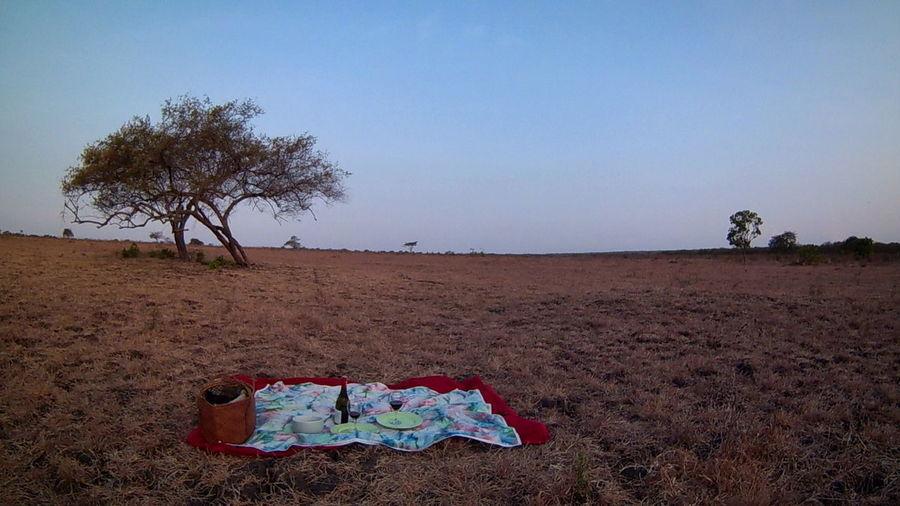 Savana , Balurannationalpark Sand Clear Sky No People Outdoors Tree Sky Nature Day