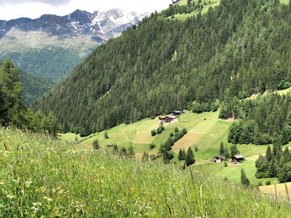 Italia Italien Italy South Tyrol Südtirol Alto Adige Ultental Green Color Beauty In Nature Plant Scenics - Nature Growth Landscape Mountain Field Land Environment Tranquil Scene No People Agriculture