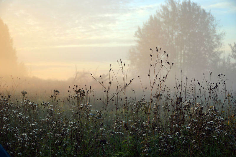 Fishing. Tomsk region, Siberia, Russia. Beauty In Nature Field Focus On Foreground Fog Landscape Morning Nature No People Outdoors Plant Russia Scenics Siberia Sky Tomsk Region Tranquility Uncultivated EyeEm Selects