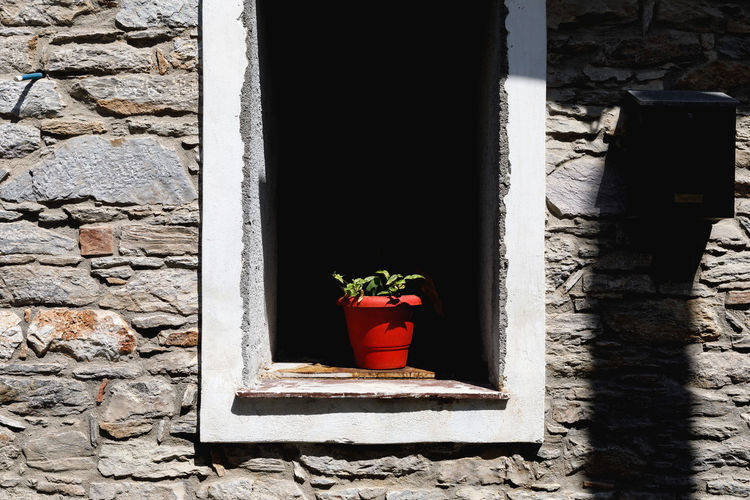 Close-Up Of Potted Plant On Window Amidst Wall
