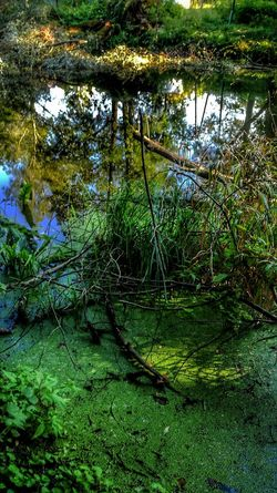 Water Reflection Outdoors Day Nature Growth Green Color No People Tree Lake Tranquility Grass Forest Beauty In Nature