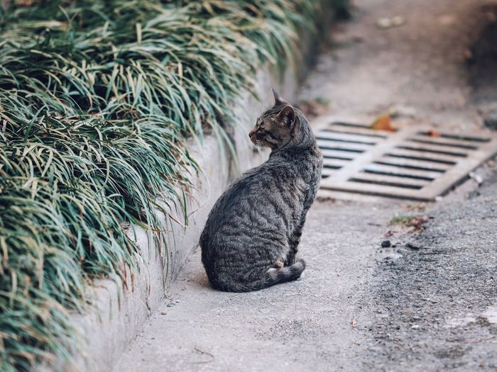 High angle view of a cat sitting on footpath