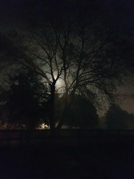 Tree Silhouette Dark Bare Tree Nature Solitude Beauty In Nature Moonlit