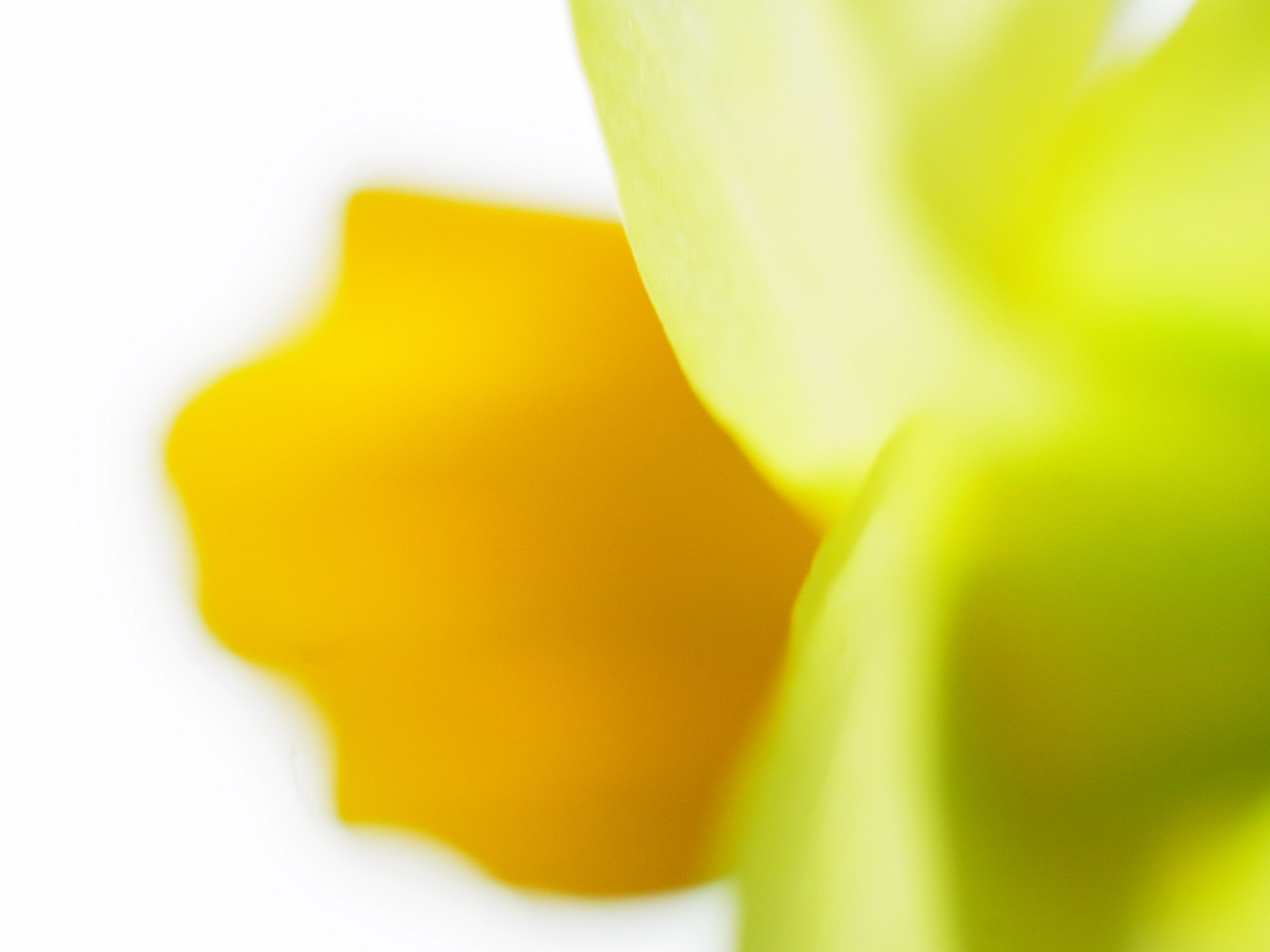 close-up, yellow, green color, studio shot, no people, white background, beauty in nature, selective focus, freshness, backgrounds, full frame, indoors, vulnerability, petal, plant, abstract, extreme close-up, growth, flower head, pattern
