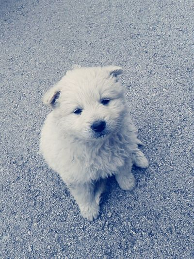 Bag of cuteness came in a front of my home, and I adopted it for now ?? Pets Dog Puppy Animals Cute Love Lovelife Life Whitedog Verycute