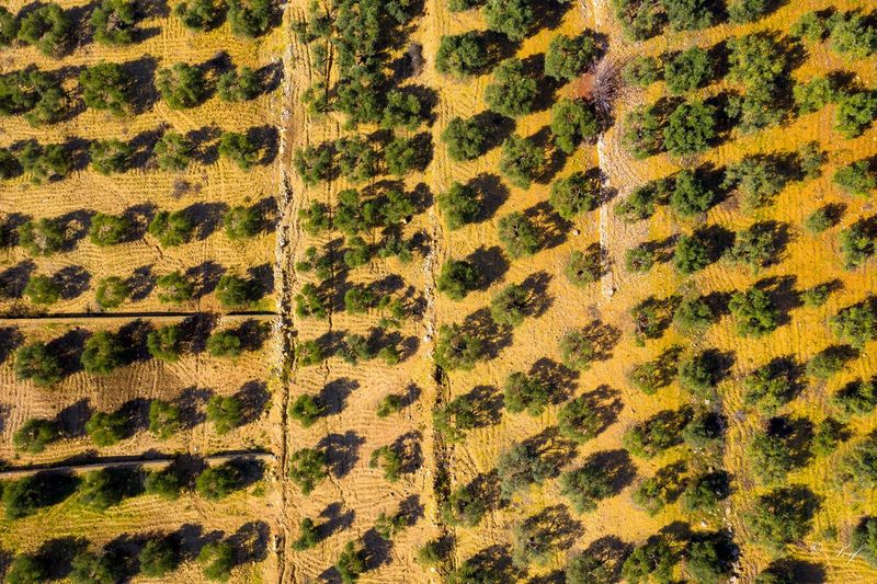 From above Backgrounds Full Frame Pattern Textile No People Close-up Textured  High Angle View