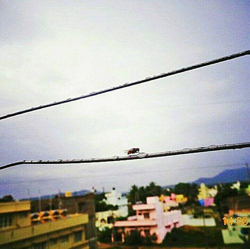 Mosquito Sky Day