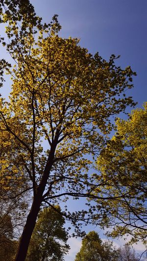Looking up into the sky🌳🍃 Tree Sky Nature Growth No People Branch Outdoors Day Beauty In Nature