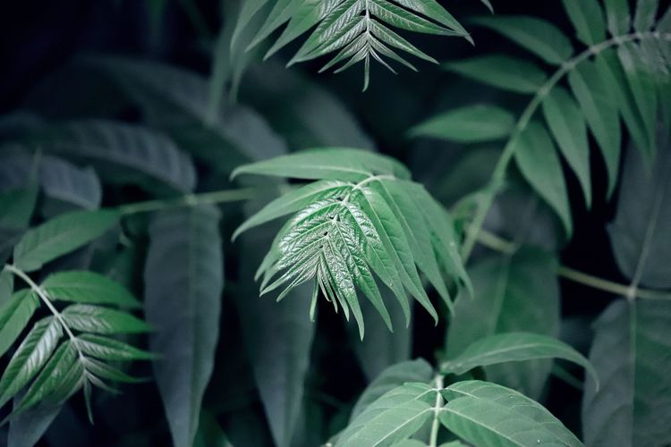 EyeEmNewHere Beauty In Nature Close-up Day Dew Focus On Foreground Fragility Freshness Green Color Growth High Angle View Leaf Leaves Nature No People Outdoors Plant Plant Part Selective Focus Tranquility Vulnerability  Water