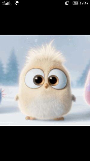 So cute.. First Eyeem Photo
