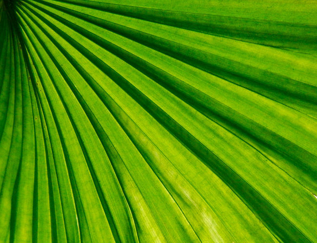 Amateurphotography Beauty In Nature Close-up Fragility Freshness Green Color Growth Leaf Natural Pattern Nature No People Outdoors Palm Tree