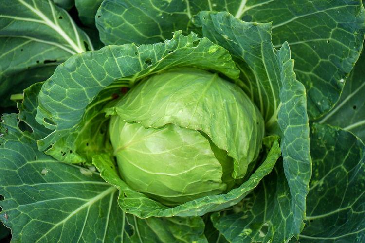 Organic salad,