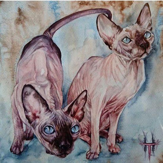 сфинкс кошки Sfinx Cats