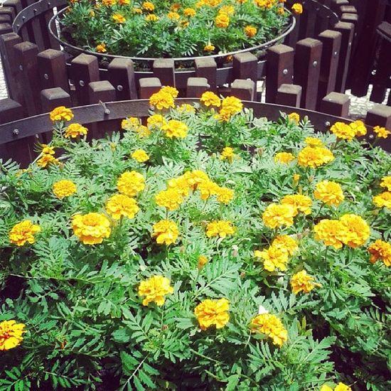 """""""Que vejo flores em você"""" Curitibacool"""