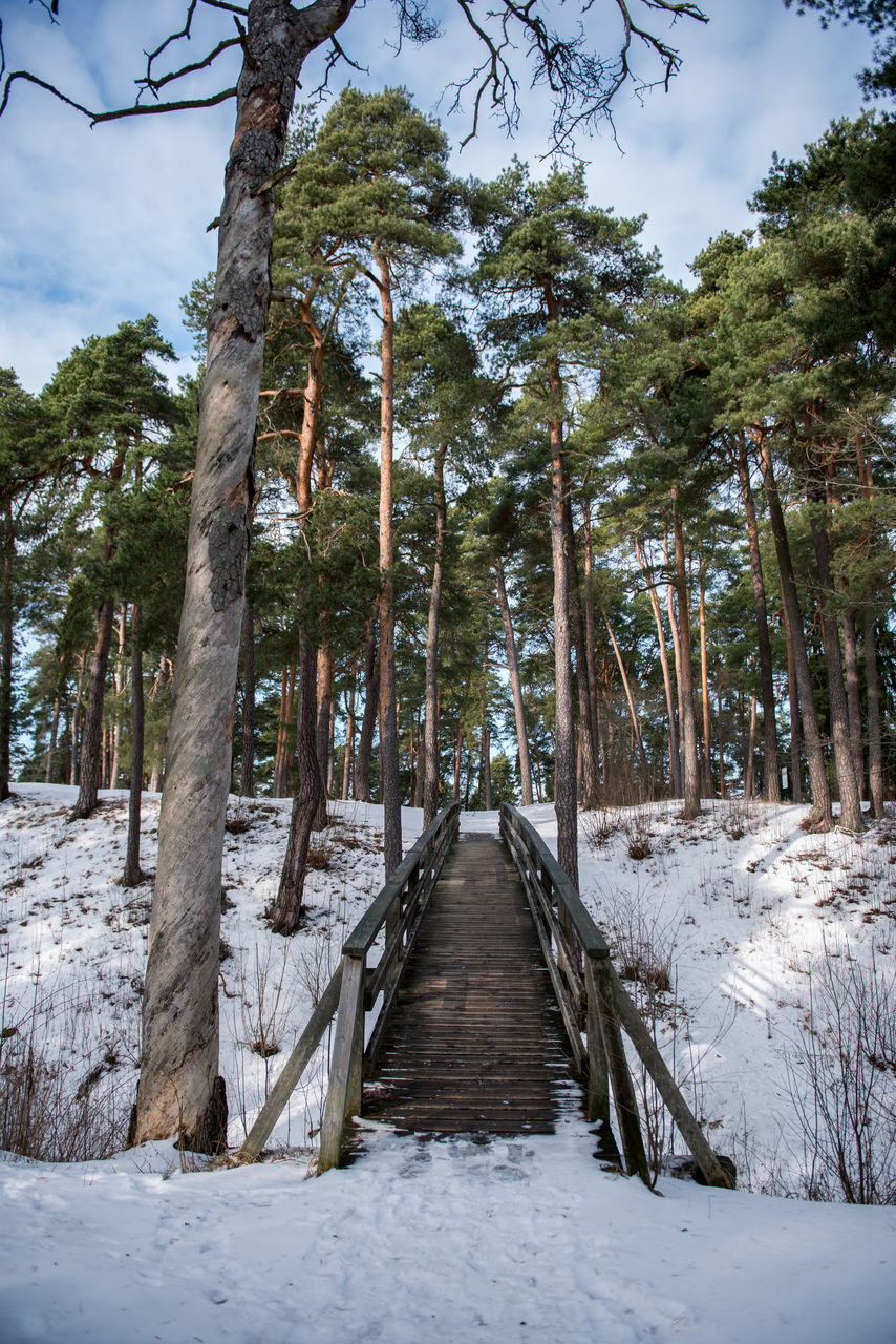 Walkway Amidst Trees Against Sky During Winter