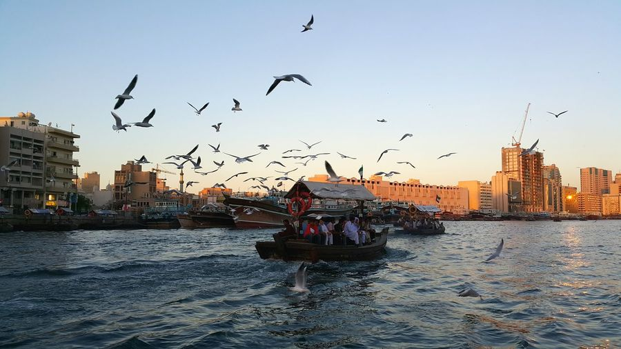 Cruising with the birds Dubai The Photojournalist - 2016 EyeEm Awards Cruising Dubaicreek Evening Cruise Flock Of Birds Birds In Flight Creek Water Taxi Abra Neighborhood Map Bird Flying Nautical Vessel Water Transportation Outdoors Mode Of Transport Sunset Togetherness People