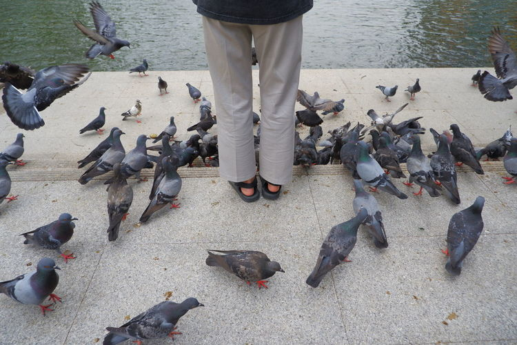 Low section of person feeding birds