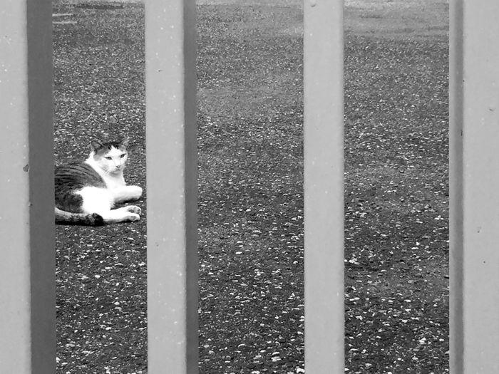 neko B&w Tokyo Shinjuku Cats Pmg_tok