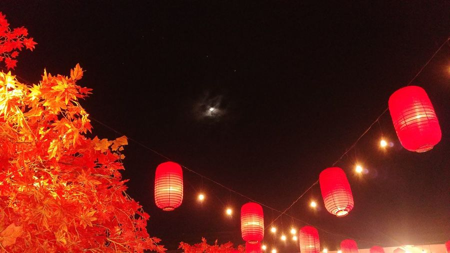 Illuminated Night Chinese Lantern Festival Lantern Sky Outdoors Leaf Moon