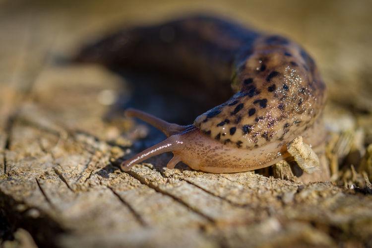 Close-up of slug on wood