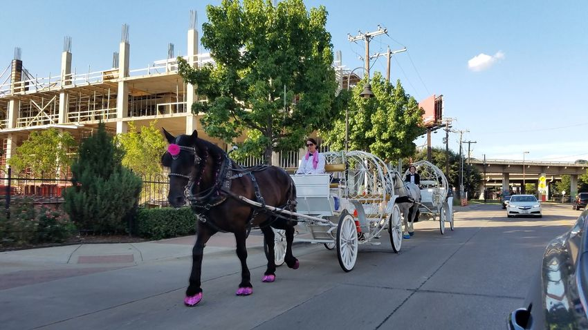 Taking Photos Hello World Outdoors Sunshine Carriage Horse Rides Transportation Dallas Tx Urban Landscape Picoftheday Streetphotography Photography City Life Downtown