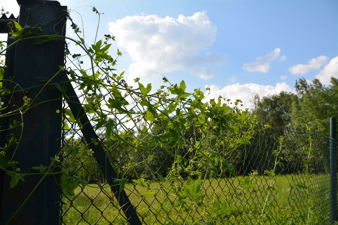 growth, nature, sky, day, tree, no people, cloud - sky, beauty in nature, green color, outdoors, low angle view, plant