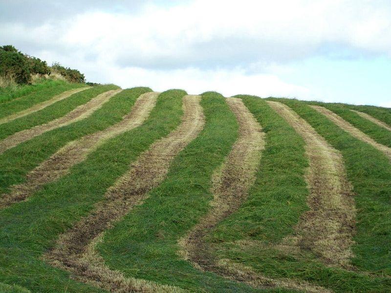 The first cut Grass Grassfield Mown Field Harvesting Silage Fodder Dairyfarming Dairy Farm Farm Farm Life Agriculture Pattern PiecesMizen Peninsula West Cork Wildatlanticway Ireland