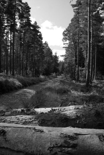 Tree Forest Nature Day No People Outdoors Growth EyeEm Nature Lover EyeEm Gallery New Black And White Black And White Photography Phoyography Walksintheforest Walks Walksinthewoods Startup First Eyeem Photo Nairn Scotland Nairn